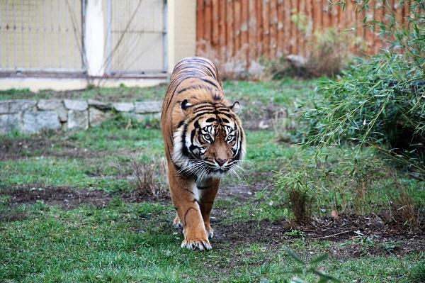 В зоопарке во Вроцлаве