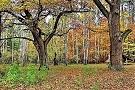 Kampinoskiy-natsionalnyiy-park sm